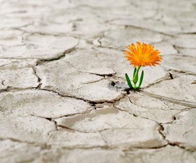 la-esperanza-flor-crece-en-medio-de-sequedal-1.jpg